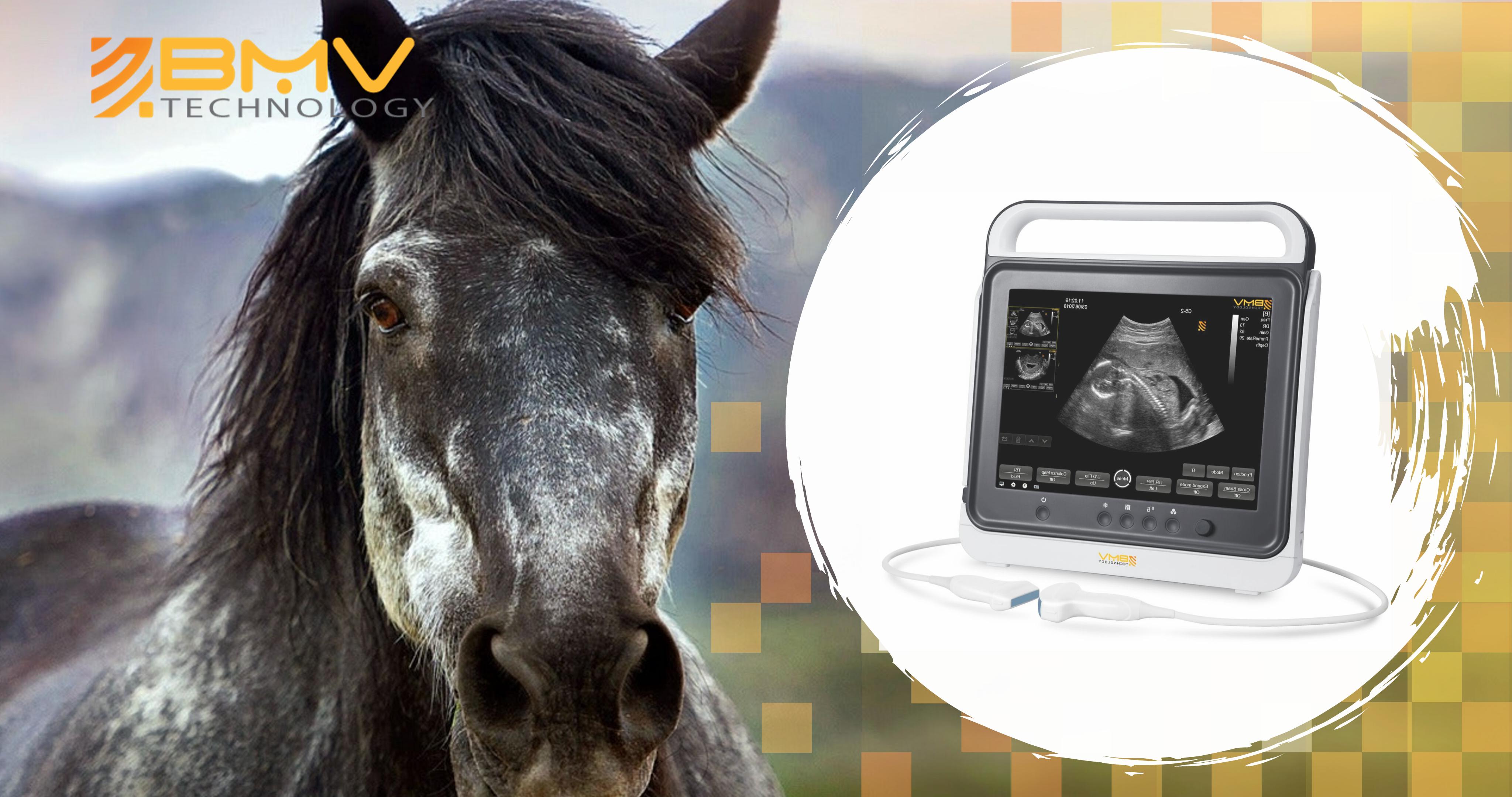 ultrasonido touch equino BMV | ARBiotech