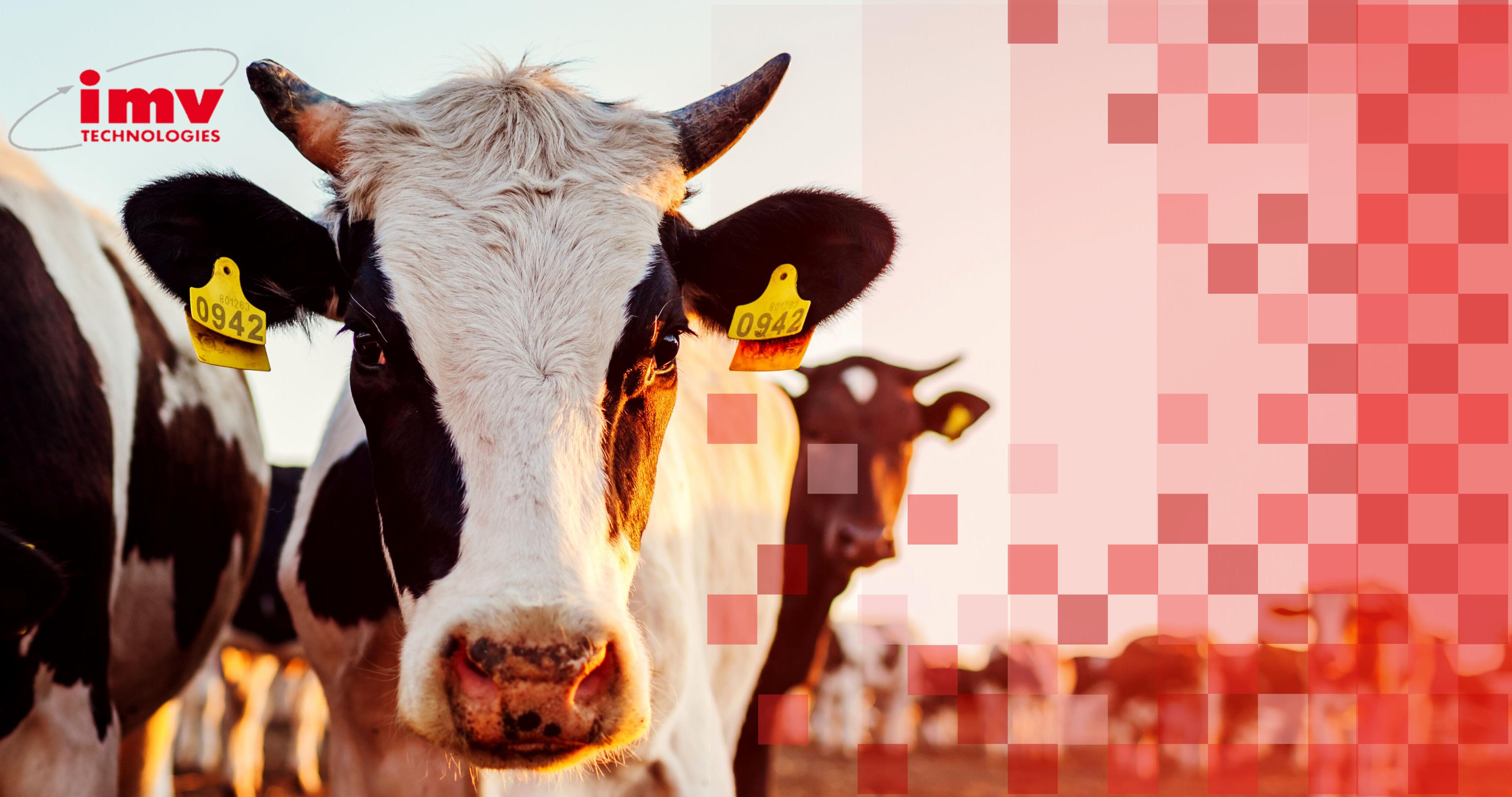 Reproducción animal bovino IMV   ARBiotech