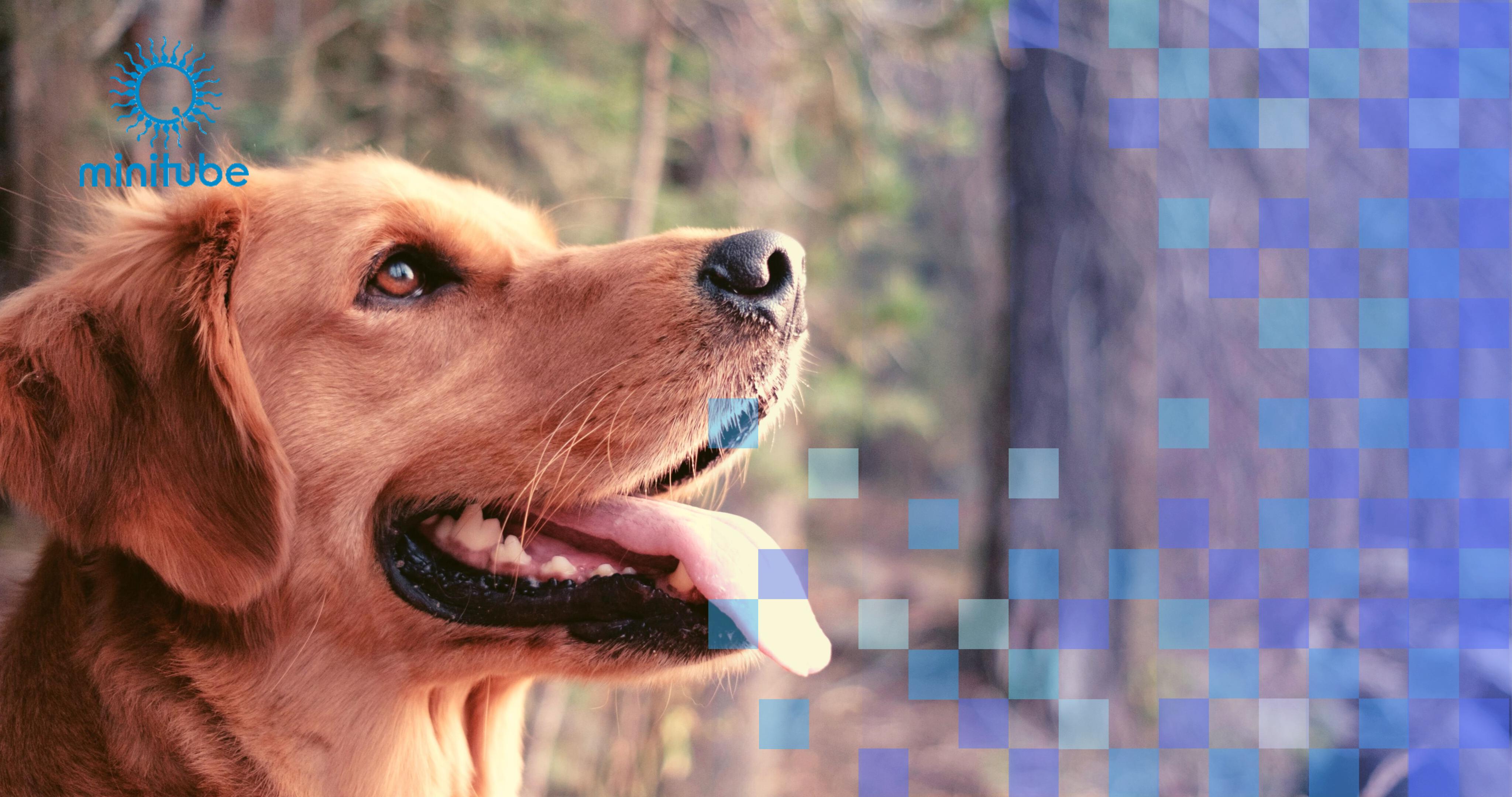 Reproducción animal caninos Minitube | ARBiotech
