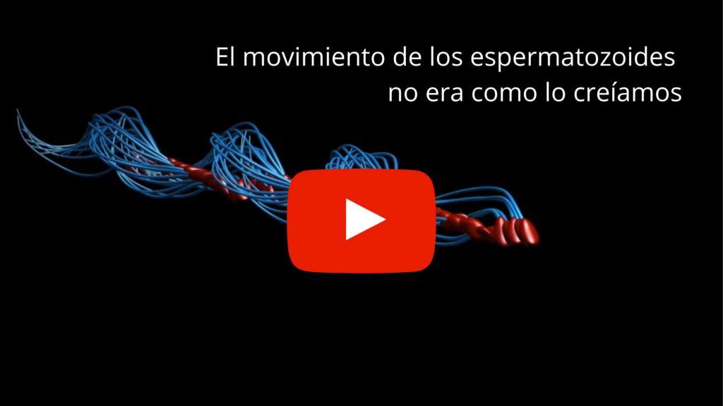 El movimiento de los espermatozoides 3D