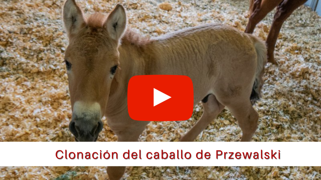 Clonación del caballo de Przewalski_ ARBiotech